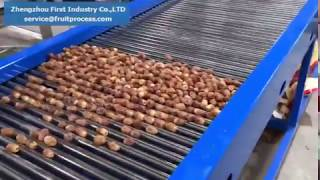 palm dates grading machine,dates sorting machine, dates grader