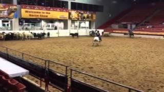 Smooch- Jared Lesh Cowhorses