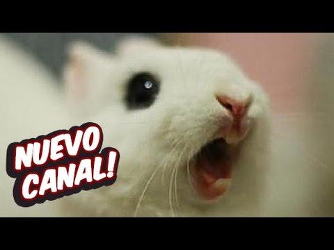 NUEVO CANAL!  Estación Conejo!!!