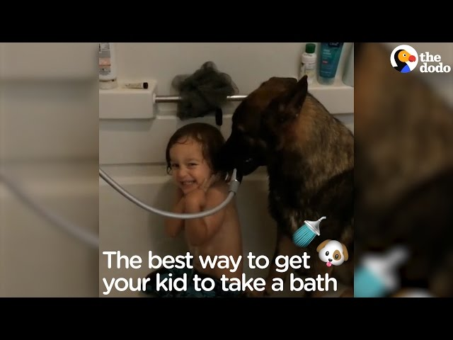 German Shepherd Helps Little Boy Take A Bath