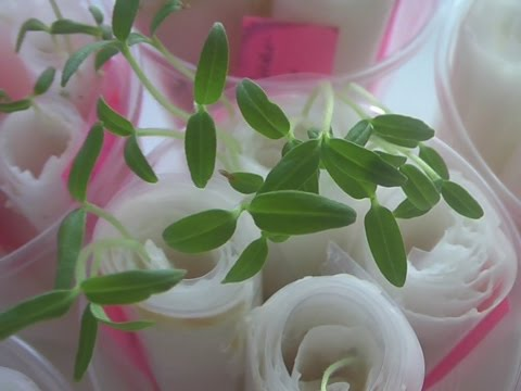 Выращивание рассады – когда и как сажать, посев и семена от А до Я – часть 1
