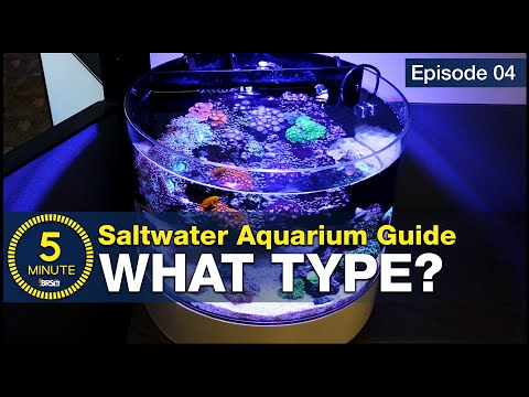 Get past the debate. Sump, Hang-on or AIO (all in one) Which type of aquarium should you choose?