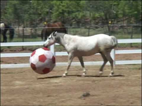 Horses, Elvis & Riley Play with Equi-Spirit Ball