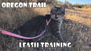Cats on the OREGON TRAIL | Its Happy Kitty World ❤️