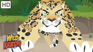 Wild Kratts - Showcasing Beautiful Animals #2 | Kids Videos