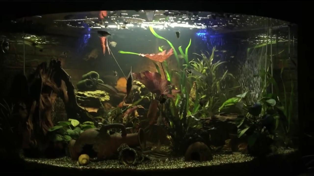 Нитраты для аквариума своими руками