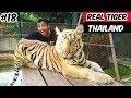 Real Tiger in Thailand | Tiger Park Pattaya 2019 | Tiger Attack | Tiger Fight |