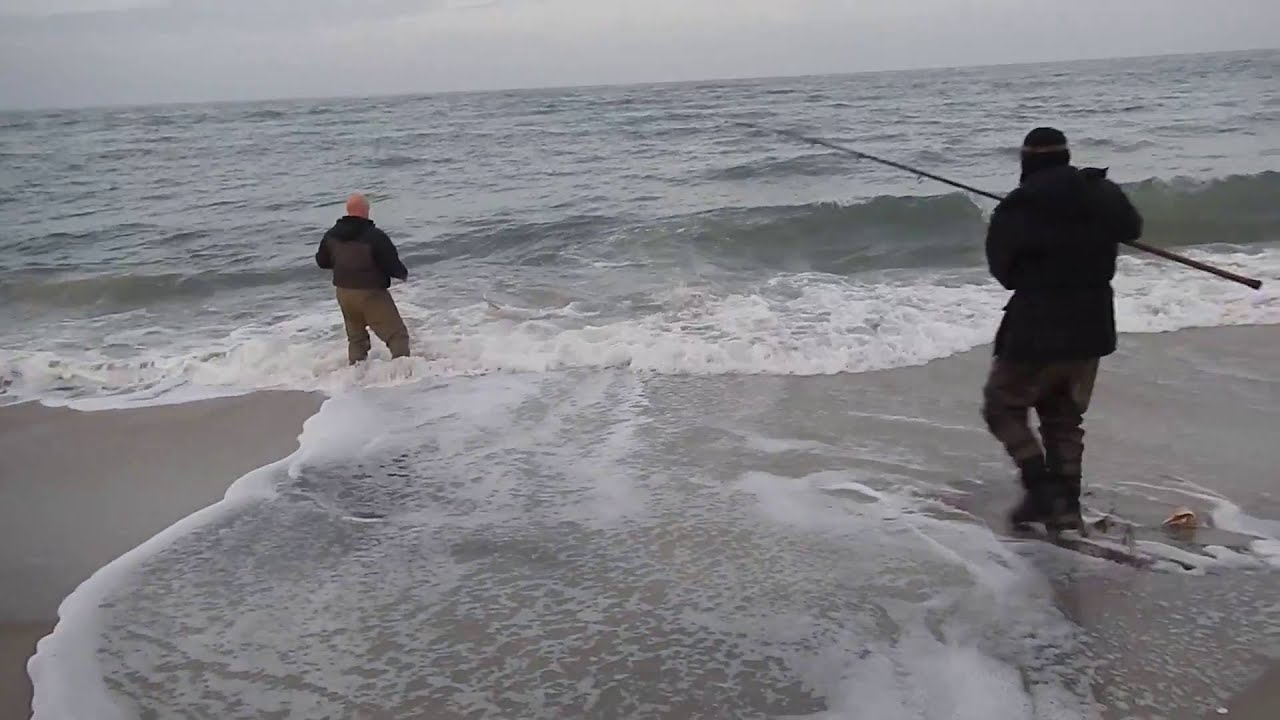 Outer banks bull shark fishing cape lookout north carolina for Shark fishing nc