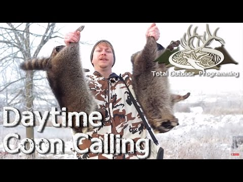 Daytime Coon Calling Tips - Hunting Raccoons with an electronic Predator Caller