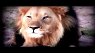 A Lion Says ALLAH