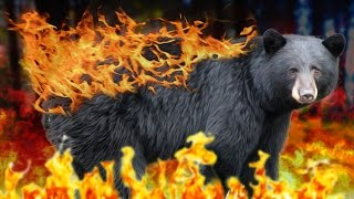 FIRE BEAR DON'T CARE | Far Cry 4 #5