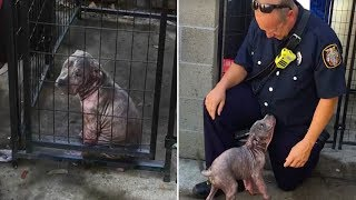 This Abused Puppy Wasn't Happy At The Shelter, But Then She Saw The Hero Who'd Saved Her Life