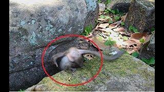 So pity ! DeeDee do Bad On Baby lori , Lori Scare Till fall Down Between Rock.