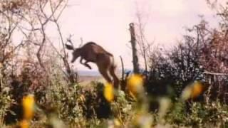 Thunderheart (1992) Trailer