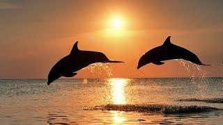 Naples Florida Sunset Cruise & Tour