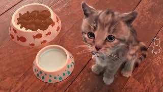Little Kitten My Favorite Cat   Play Fun Cute Kitten Games For Children   Kids Learning Games