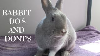 RABBIT DO'S AND DONT'S! | Rabbit care