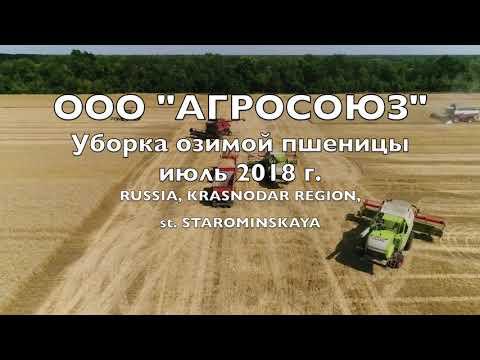 Уборка озимой пшеницы, июль 2018 г.