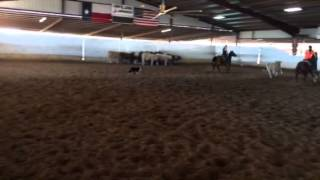 Peggy- Jared Lesh cowhorses