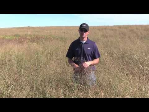 Diversifying a Monoculture of Switchgrass Part 2
