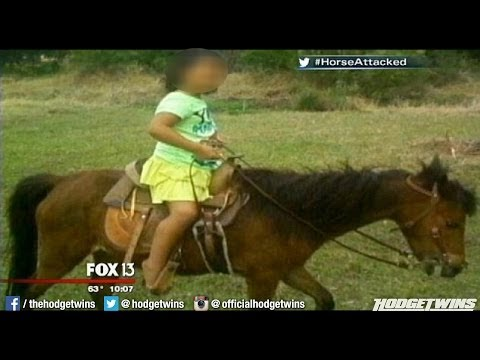 Girls Horse Attacked By Pit Bulls Reaction