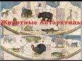 Удивительные животные Антарктиды/Австралии (Л.Д.О. 113 ч.)