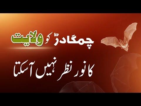 Chimgadar Ko Wilayat Ka Noor Nazar Nhi Aa Skta    Ustad e Mohtaram Syed Jawad Naqvi