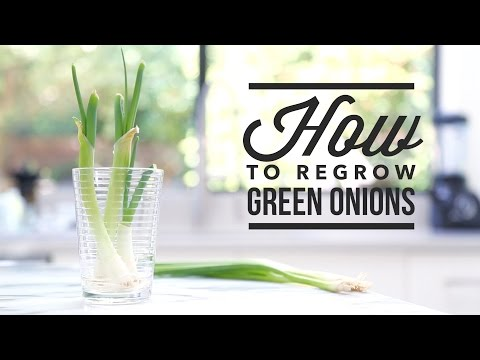 how to grow scallions at home