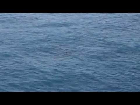 delfines en golfo de  mexico cd  del carmen campeche plataforma ku-m