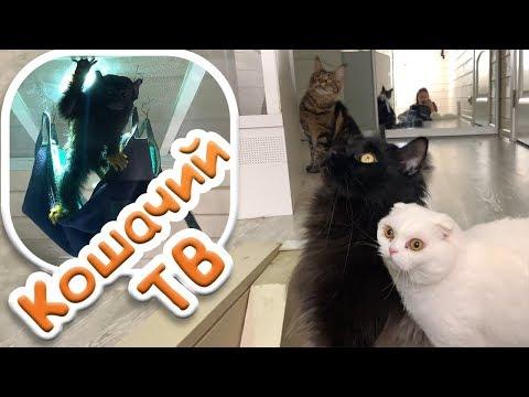НОВЫЙ КОШАЧИЙ ТЕЛЕВИЗОР / Пусси подружился с обезьянкой thumbnail