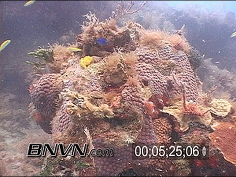 Tropical Reef Fish Tank footage part 3