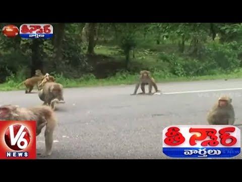 Alugunur Gurkul Principal Using Langur Monkey To Frighten Other Monkeys | Teenmaar News