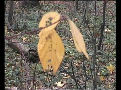 Листья на воде живые обои - Фото мир природы