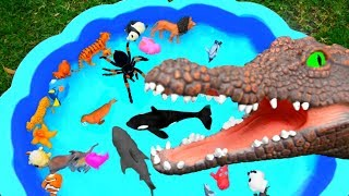 Learn Colors With Wild Animals And Farm Animal Toys For Kids
