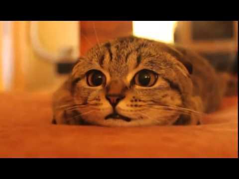 Este gato se ha metido de lleno en la película que está viendo