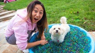 PUPPY ORBEEZ BATH CHALLENGE!!