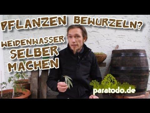 Pflanzen Bewurzeln? Weidenwasser Selber Machen | Paratodo.de Vom 13.05.2013