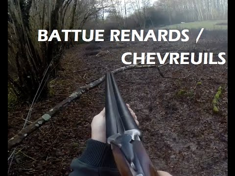 CHASSE : Battue Aux Renards Et Chevreuils