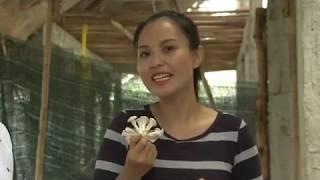Giá trị dinh dưỡng từ nấm