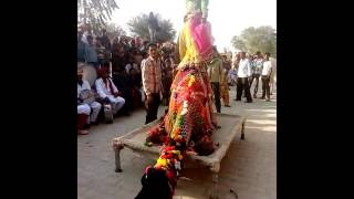 राजस्थानी ऊट डास