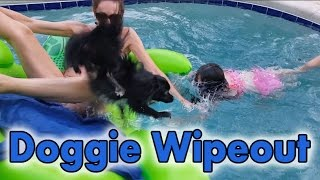 FAIL Playing with the Dog in the Pool Fun Kid Playing Swimming
