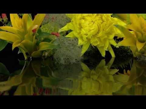 SHARP AQUOS QUATTRON video clip demo
