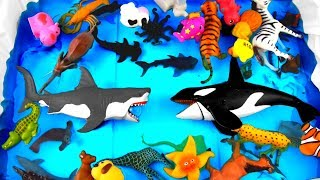 Learn Sea Animals and Zoo Animal Names and Colors For Kids! Educational Video for Children