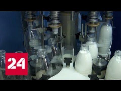 Молоко без молока и творог без коровы: помочь должна новая маркировка молочной продукции - Россия 24