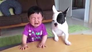 Whatsapp funny videos 2017  Most funny DOG AND KID