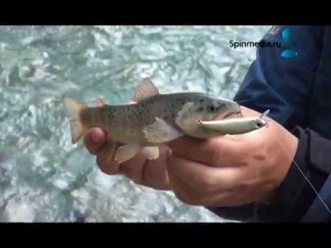 как ловят форель на кавказе местные рыбаки