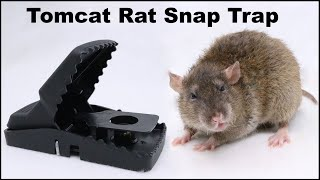 The Tomcat Rat Snap Trap & A Bobcat. Mousetrap Monday