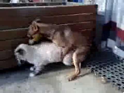 sapık köpek ve azgın kedi