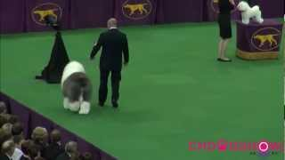 137th Westminster dog show Best In Show BIS.mp4