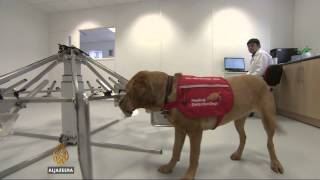 Study: Dogs can detect some cancers with 90% success